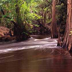 Stream flowing in a forest, Shell Creek, Florida, USA
