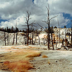 Hot spring on a landscape, Angel Terrace, Mammoth Hot Springs, Yellowstone National Park, Wyoming, USA