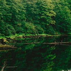 Creek in a forest, Terrace, British Columbia, Canada