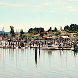 Boats moored at a harbor, Gig Harbor, Pierce County, Washington State, USA