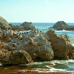 Rock formations at a coast, Bird Rock, Marin County, Point Lobos State Reserve, California, USA