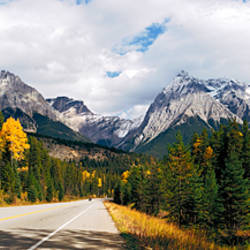 Road passing through a forest, Yoho National Park, Alberta, British Columbia, Canada