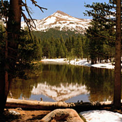 Reflection of mountains and trees in a lake, Mount Gibbs, Yosemite National Park, Eastern Sierra, California, USA