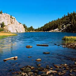 Trees along a river, Little Lakes Valley, Eastern Sierra, California, USA