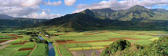 High angle view of a field with mountains in the background, Hanalei Valley, Kauai, Hawaii, USA