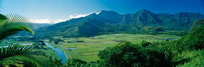 High angle view of taro fields, Hanalei Valley, Kauai, Hawaii, USA