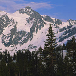 Trees on a snow covered mountain, Mt Shuksan, Mt Baker-Snoqualmie National Forest, Washington State, USA