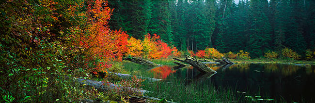Pond in forest in Autumn
