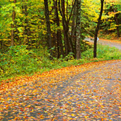 Road passing through a forest, Country Road, Peacham, Caledonia County, Vermont, USA