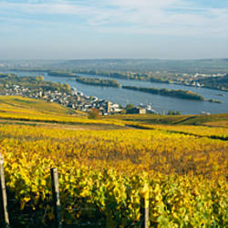 Vineyards near a town, Rudesheim, Rheingau, Germany