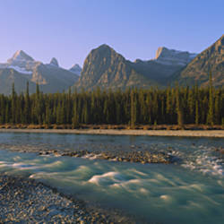 Trees along a river with a mountain range in the background, Athabasca River, Jasper National Park, Alberta, Canada