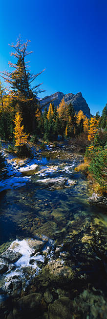 Stream flowing in a forest, Mount Assiniboine Provincial Park, border of Alberta and British Columbia, Canada