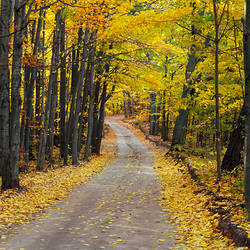 Autumnal leaves fallen on a road in a forest, Sleeping Bear Dunes National Lakeshore, Michigan, USA