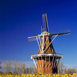 Windmill in a tulip field, De Zwaan, Windmill Island, Holland, Ottawa County, Michigan, USA