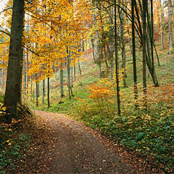 Road passing through a forest, Baden-Wurttemberg, Germany