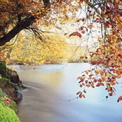 Trees along a river, River Dart, Bickleigh, Mid Devon, Devon, England