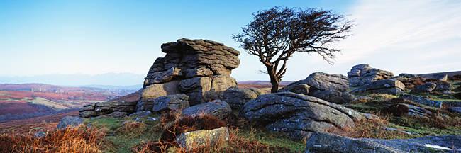 Bare tree near rocks, Haytor Rocks, Dartmoor, Devon, England