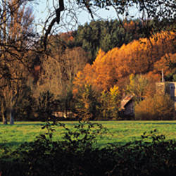 Castle in a forest, Bickleigh Castle, Exe Valley, Bickleigh, Mid Devon, Devon, England