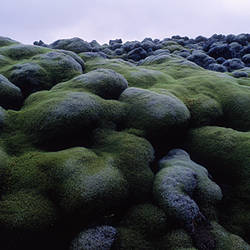Close-up of moss on rocks, Iceland