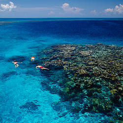 High angle view of three men snorkeling in the sea, Blue Hole, Lighthouse Reef, Belize