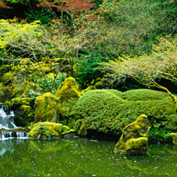 Waterfall in a garden, Japanese Garden, Washington Park, Portland, Oregon, USA