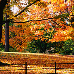 Trees in a forest, Central Park, Manhattan, New York City, New York, USA