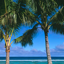 Palm trees on the beach, Rarotonga, Cook Islands, South Pacific ocean