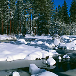 Snow along a river, Alpine River, Yosemite National Park, California, USA