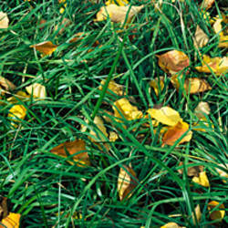 Green grass with yellow leaves, Capitol Reef National Park, UT, USA