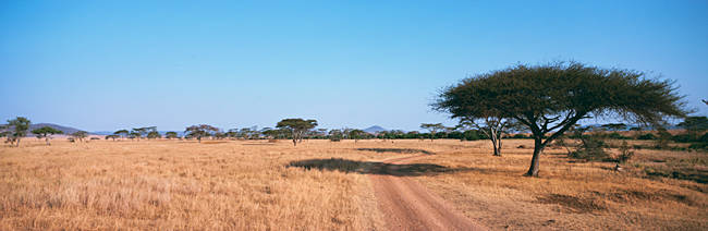 Tire track through a field, Serengeti National Park, Tanzania