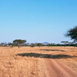Tire track through a field, Serengeti National Park, Tanzania