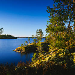 Trees at the lakeside, Lake Saimaa, Puumala, Finland