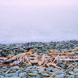 Close-up of logging debris and pebbles at the coast, Robin Hood Bay, Nelson, South Island, New Zealand