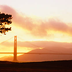 Silhouette of trees at sunset, Golden Gate Bridge, San Francisco, California, USA