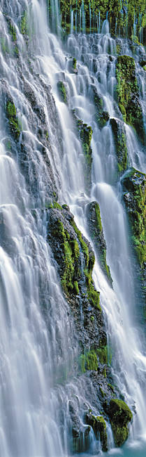 Waterfall in a forest, Burney Falls, McArthur-Burney Falls Memorial State Park, California, USA