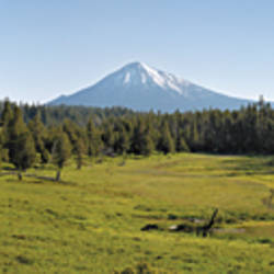 Trees on a landscape with a mountain in the background, Mt McLoughlin, Oregon, USA