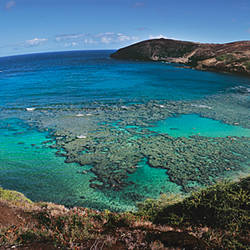 High angle view of a beach, Hanauma Bay, Oahu, Hawaii, USA