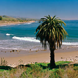 High angle view of palm trees on the beach, Refugio State Beach, Santa Barbara, California, USA