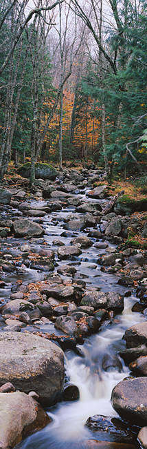 Water flowing in the forest, Adirondack Mountains, New York State, USA