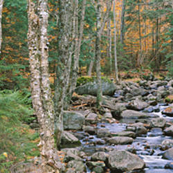 River flowing through a forest, Adirondack Mountains, New York State, USA