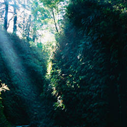 Sun beam in a canyon, Fern Canyon, Prairie Creek State Park, California, USA