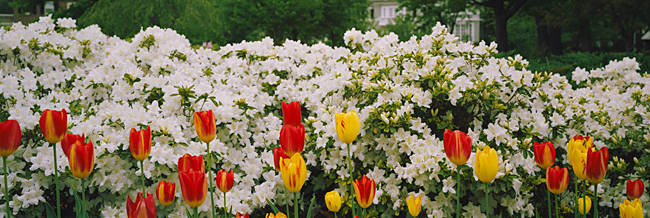 Flowers in a garden, Sherwood Gardens, Baltimore, Maryland, USA