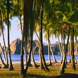 Palm trees on the beach, Carrillo Beach, Nicoya Peninsula, Guanacaste Province, Costa Rica