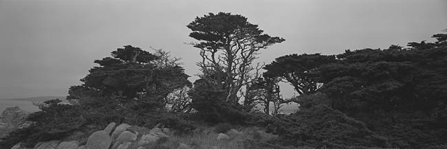 Trees on the edge of a cliff, Point Lobos State Reserve, California, USA