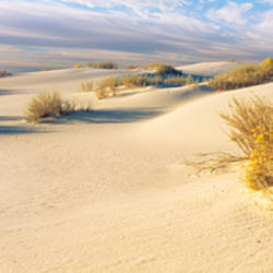 Desert plants in a desert, White Sands National Monument, New Mexico, USA