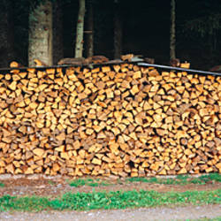 Stack of wooden logs in a forest, Black Forest, Baden-Wurttemberg, Germany