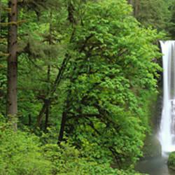 USA, Oregon, Silver Falls State Park
