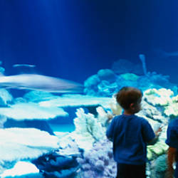 Rear view of two boys watching animals swimming, Shedd Aquarium, Chicago, Illinois, USA
