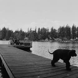 Dog walking on the pier, Bellevue, Washington State, USA