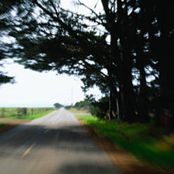 Trees on both sides of a road, California, USA